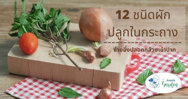 12ผักปลูกง่ายในกระถาง4